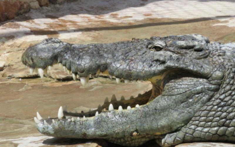 крокодиловая ферма джерба отзывы