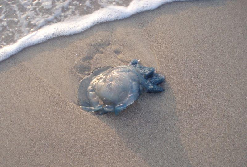 медузы средиземного моря тунис фото хотел